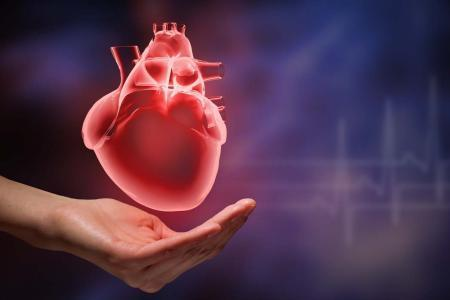 研究人员新发现的途径可能具有治疗心力衰竭的潜力