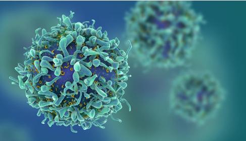 研究人员研究了14种西番莲的抗癌特性