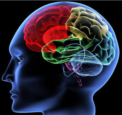 多发性硬化症的精神疲劳与神经资源募集有关