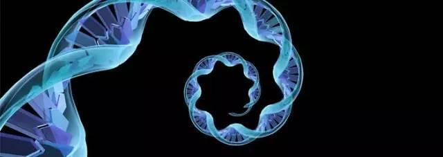 RNA显示出逆转神经系统疾病潜在突变的潜力