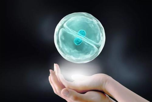 主要干细胞发现以促进发展和再生医学研究