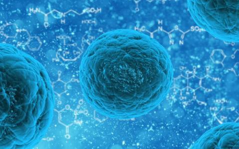 用干细胞进行脑卒中脑修复