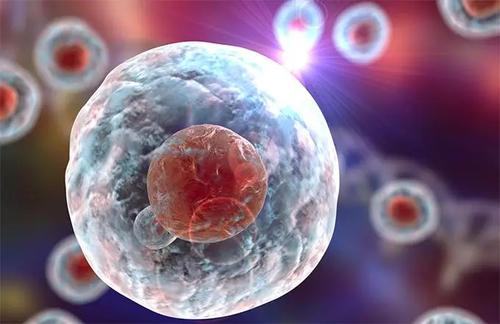 细胞条形码可以帮助科学家了解干细胞的行为