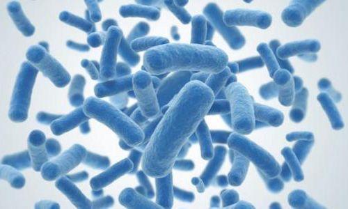 微生物生长和碳吸收主要是由自然驱动而不是培育