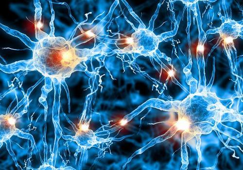某些细胞在大脑中分泌一种保护神经元的物质