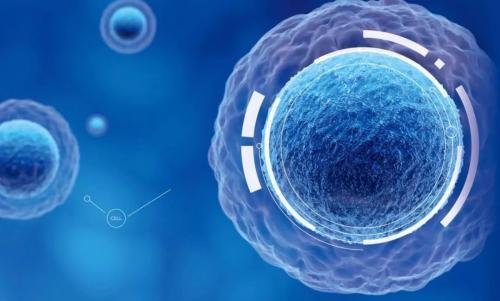 免疫细胞将致命的真菌从小鼠肺部运送到血液中