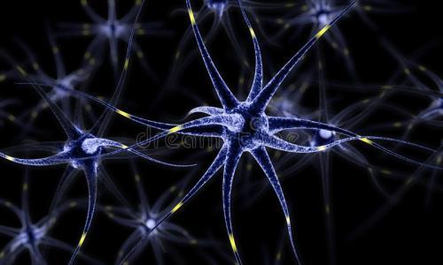 最新研究表明人脑容纳着各种各样的神经元