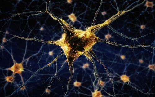 肉毒杆菌毒素的甜食是其关键的神经元靶向机制的基础
