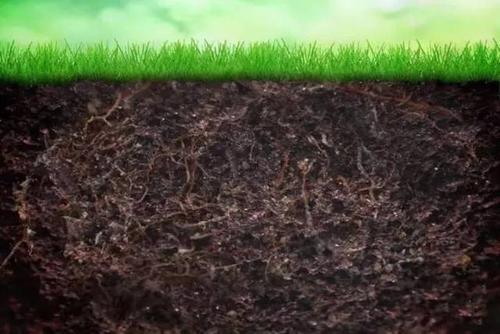 研究人员发现了微生物和土壤之间的复杂相互作用