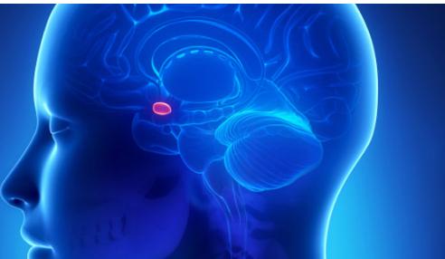 研究人员在杏仁核中发现了一组神秘的神经元