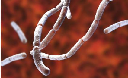 研究人员找到从细菌中收集电能的方法