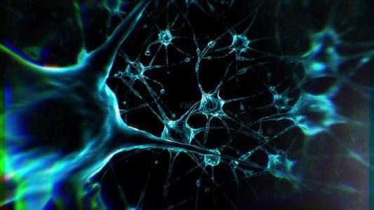 科学家观察了与触觉加工相关的大脑区域神经元活动